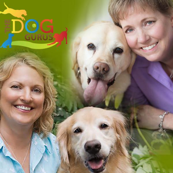 Dog Gurus Image