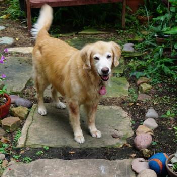 Off Leash Dog Play Pet Guru