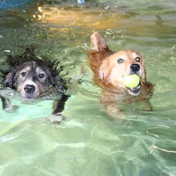Archie & Shep