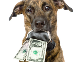 A dog with sad eyes and turned down ears stares ahead while clutching a small black-and-silver coin purse in its mouth. A five-dollar and one-dollar bill are coming out of the coin purse.