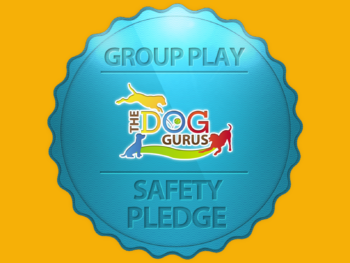 """A gold background with a blue badge that reads, """"Group Play Safety Pledge,"""" and has The Dog Gurus logo on it."""