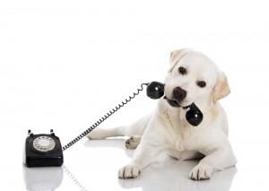 live calls