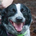 Picture of Tilly the dog smiling at the camera.