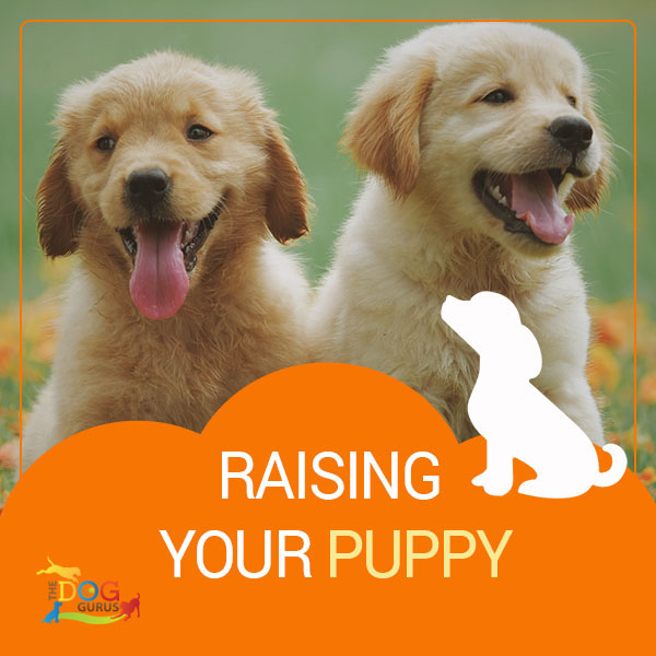 how to raise puppy