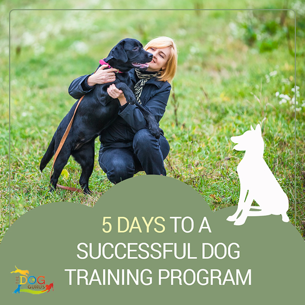 successful dog training program